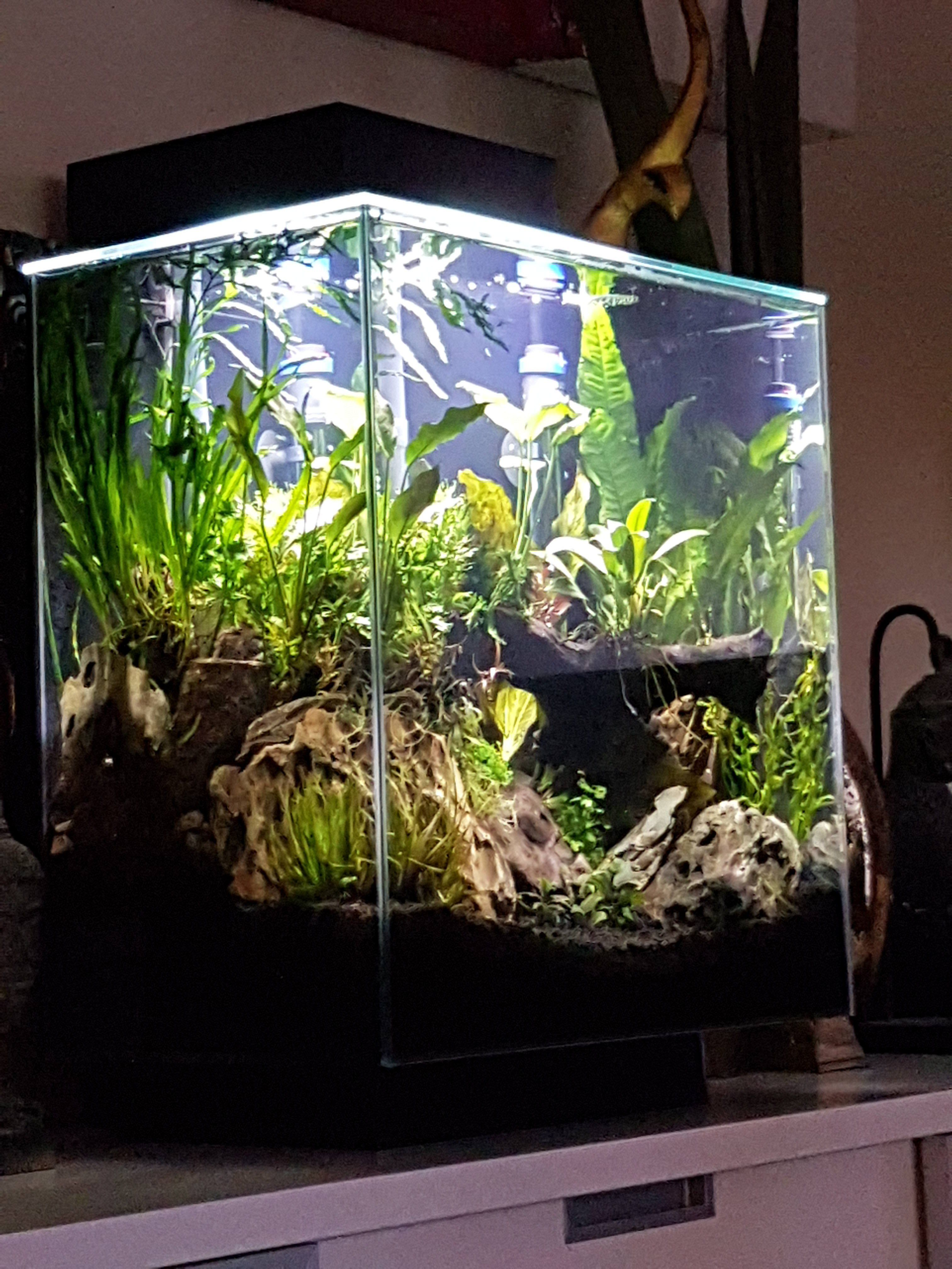 New Aquascape With Fluval Edge Using Ada Amazonia Tropical Fish Forums