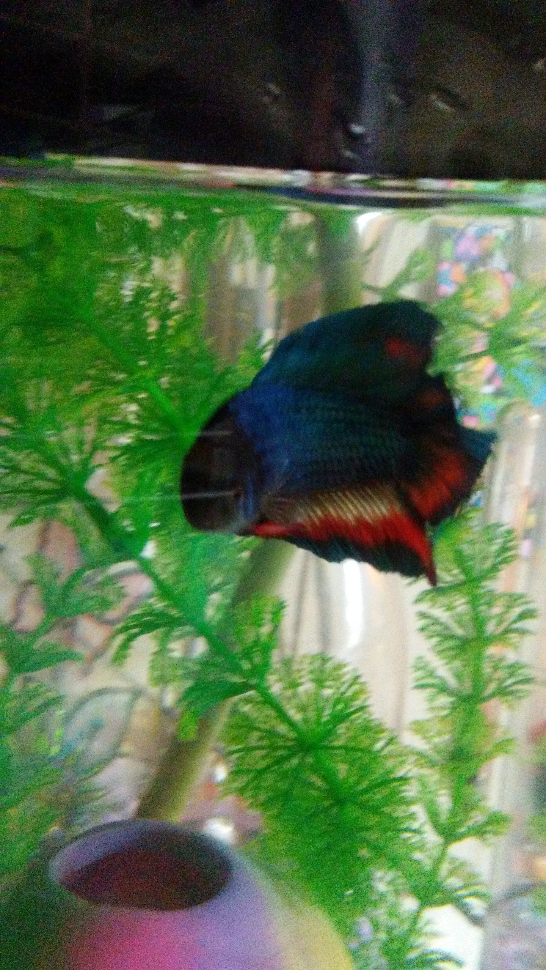 Is this fin rot? | Tropical Fish Forums