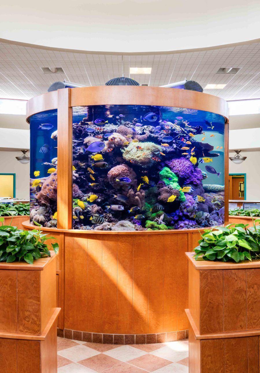 3000g aquarium.jpg