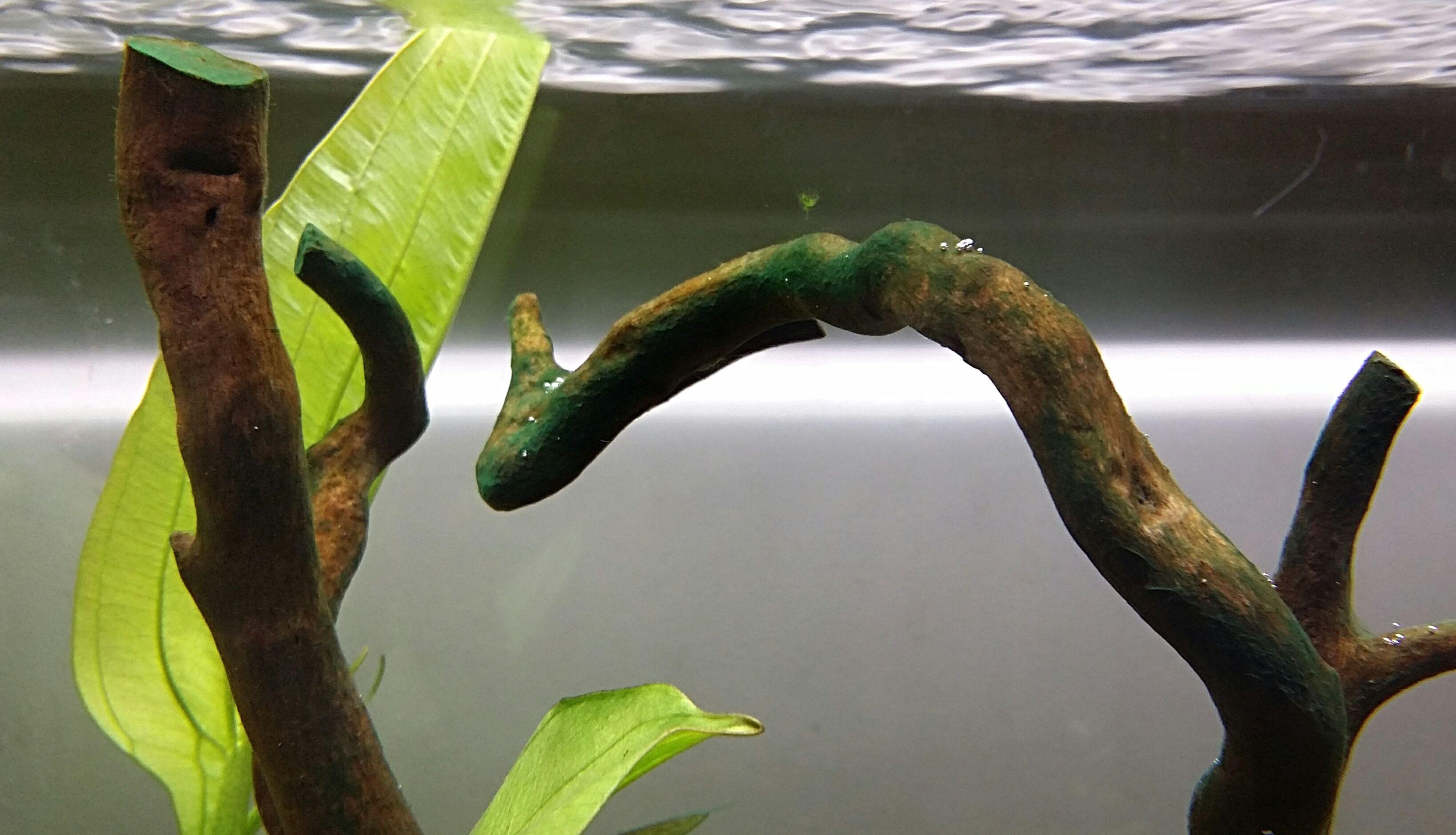 Algae 1.jpg