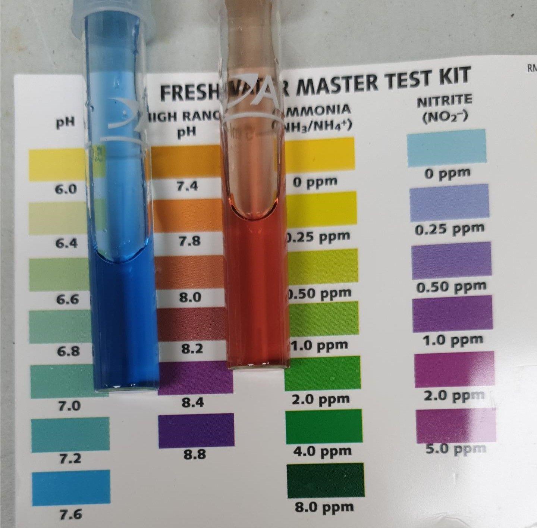 aquarium water pH 8.jpeg