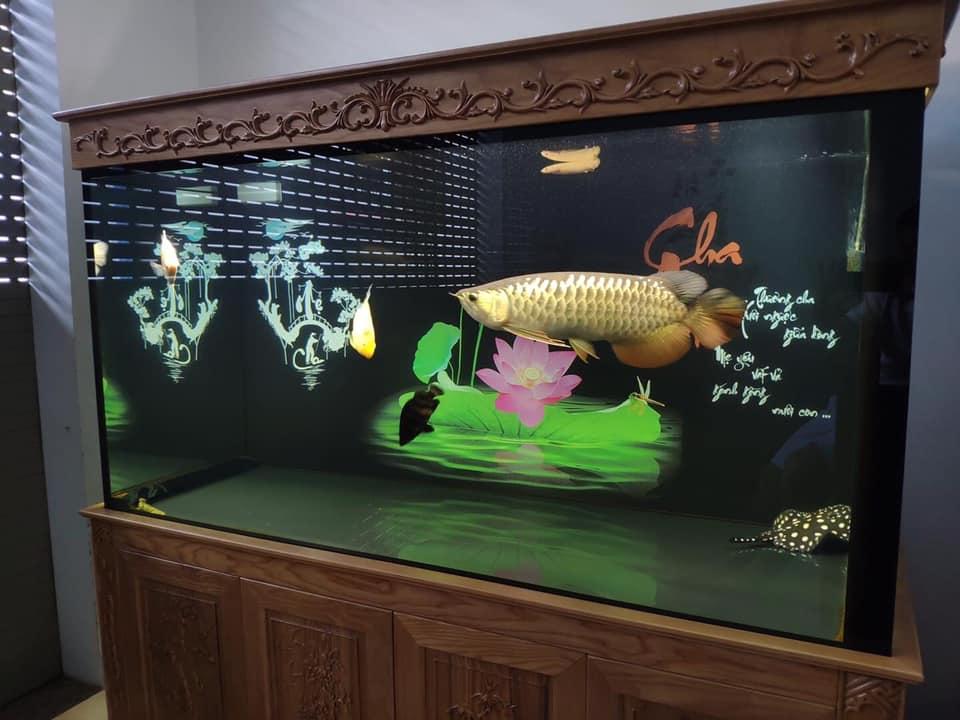 arowana-fish-with-intestinal-diseases.jpg