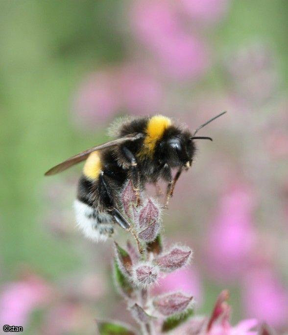 Bees 088a.jpg