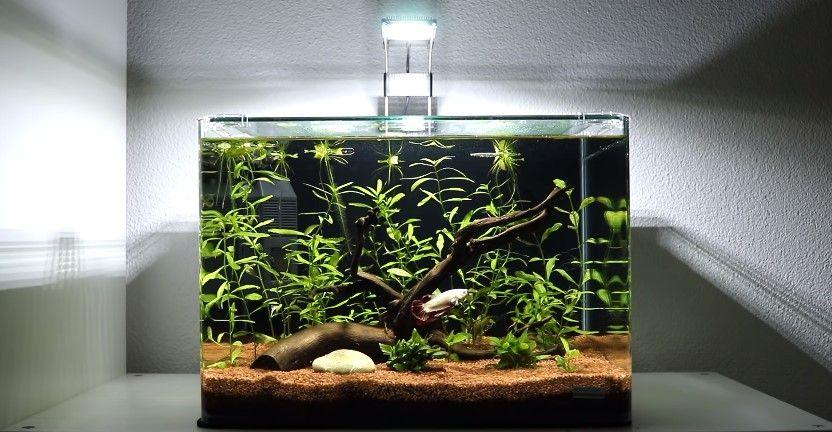 Betta-Fish-Tank-Size.jpg
