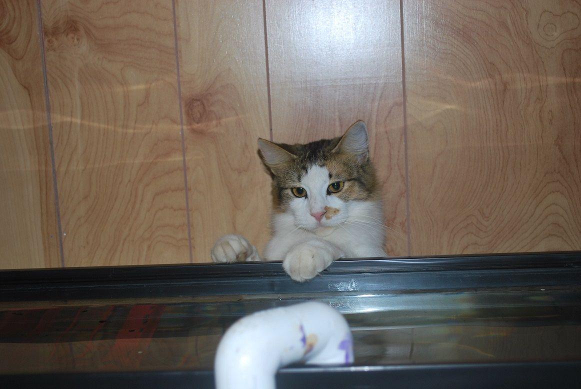 Bonnie Kitty always likes to help.jpg