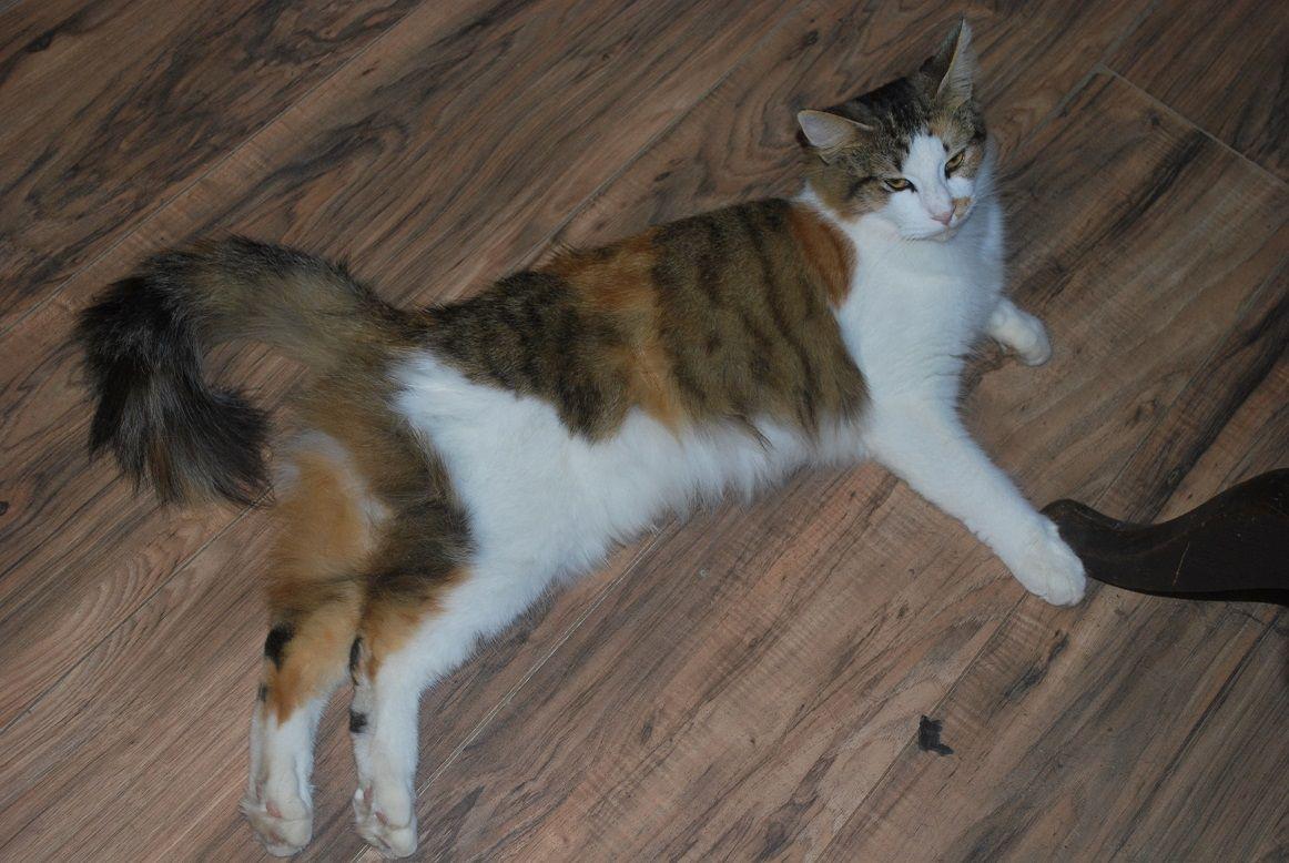 Bonnie Kitty on the floor.jpg