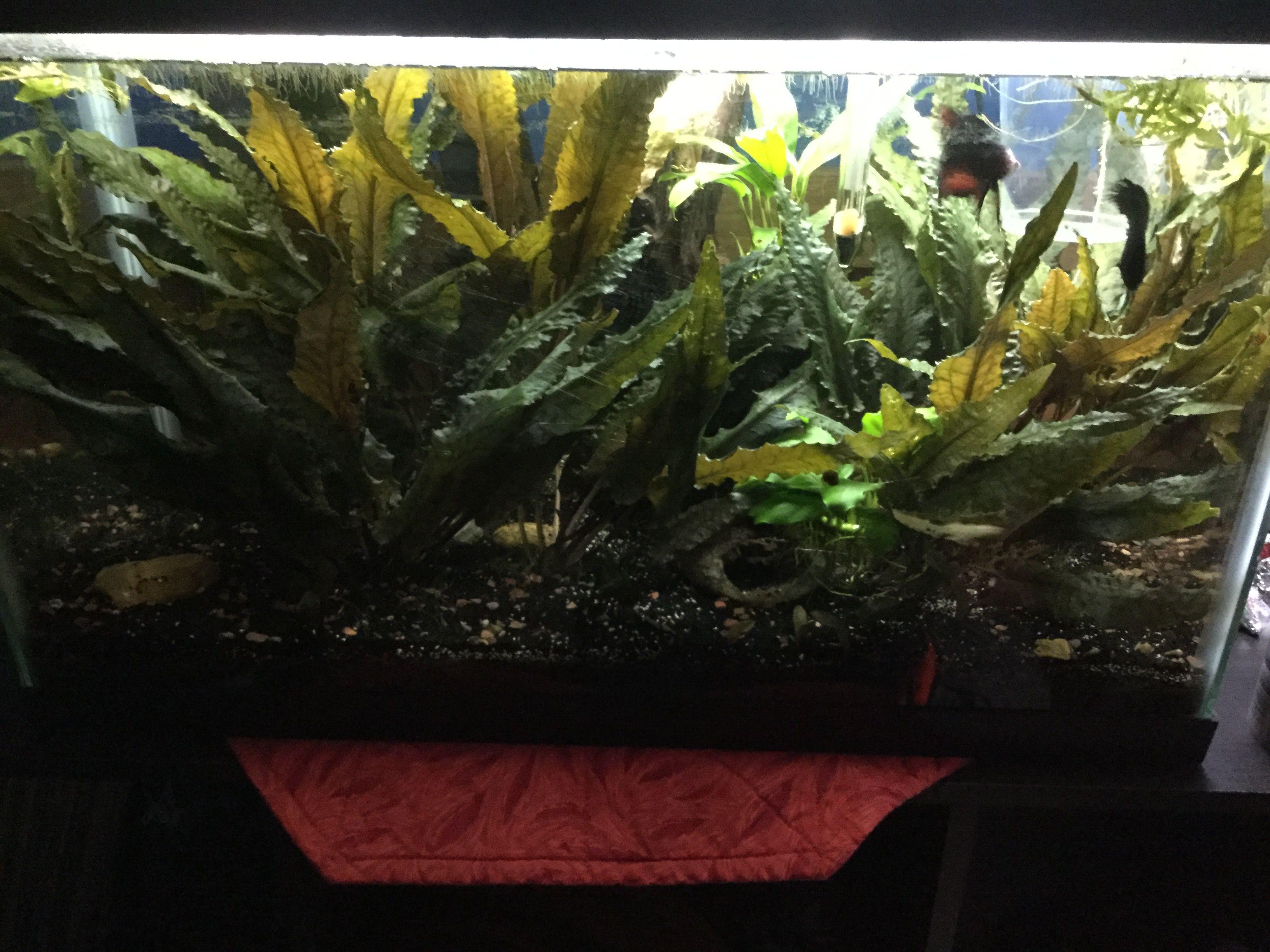 DT spawning tank.JPG