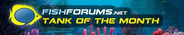 fishforums-toftm.jpg