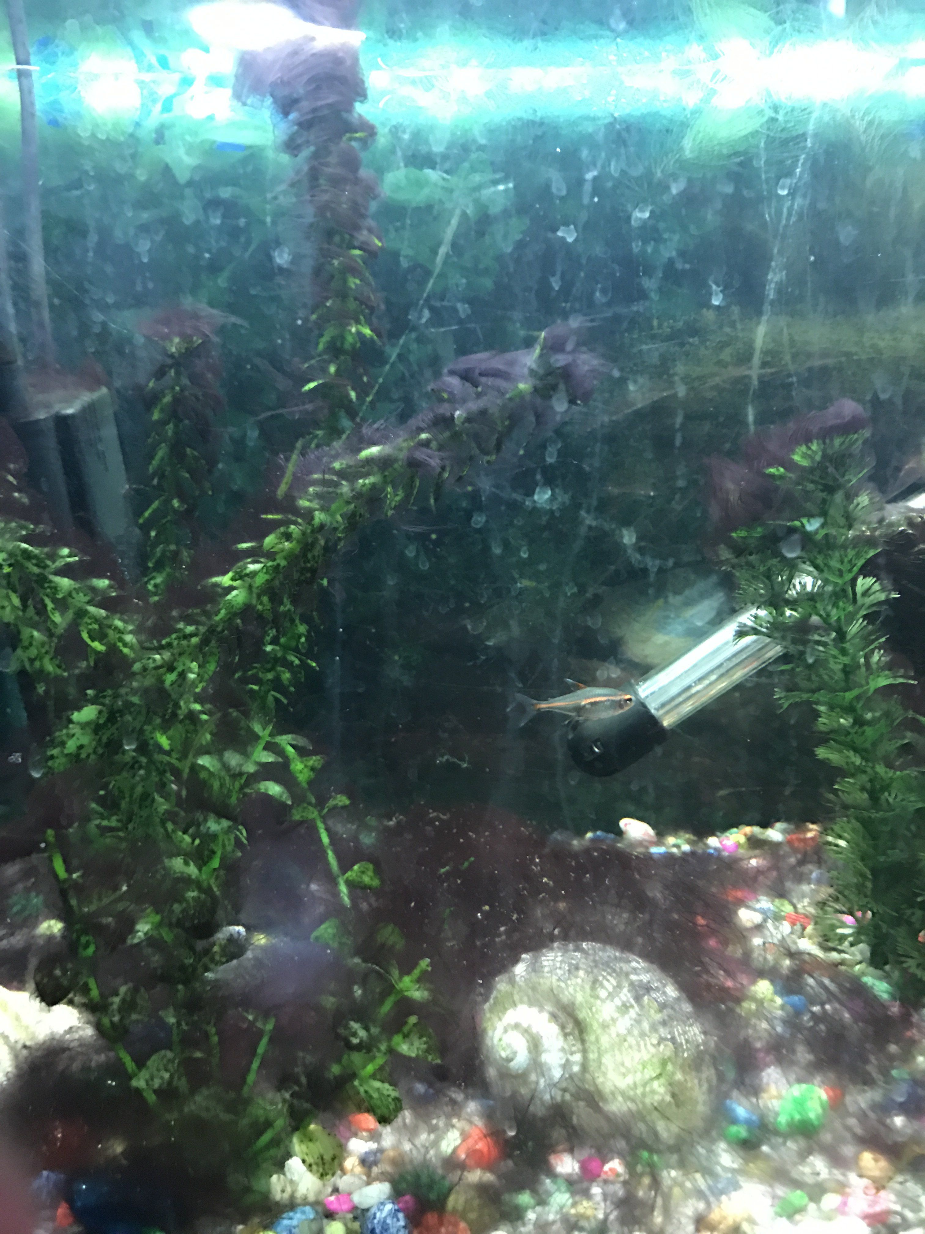 What type of algae is this tropical fish forums for Black algae in fish tank