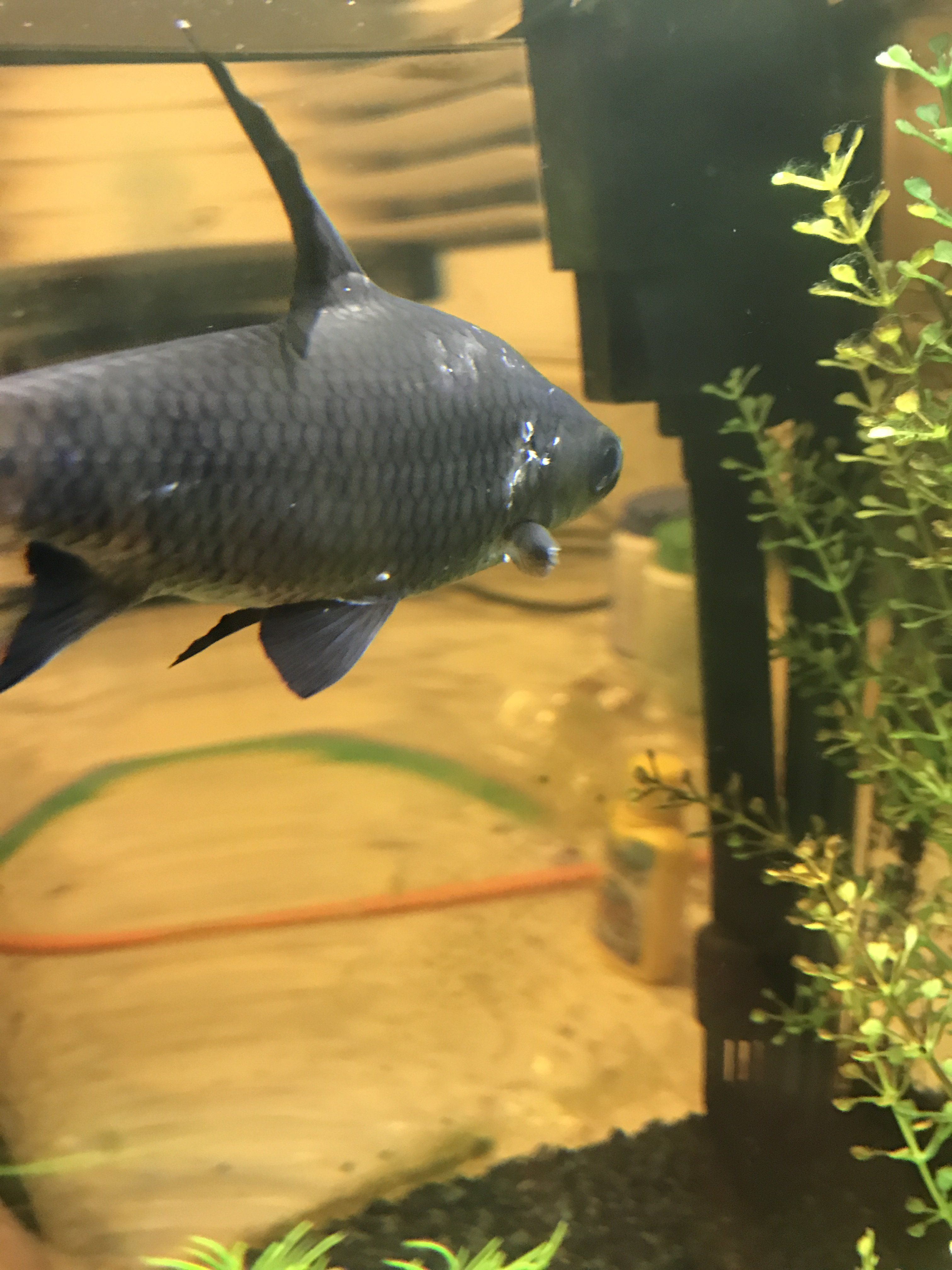 Fish for uncycled tank - Img_0926 Jpg