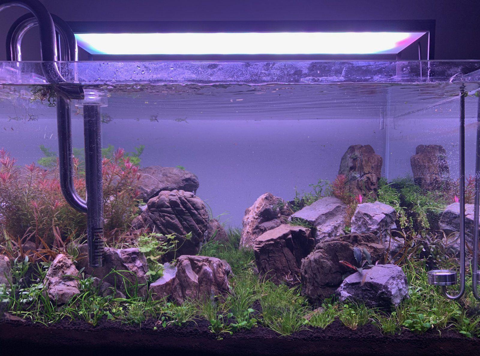 New aquascape | Tropical Fish Forums