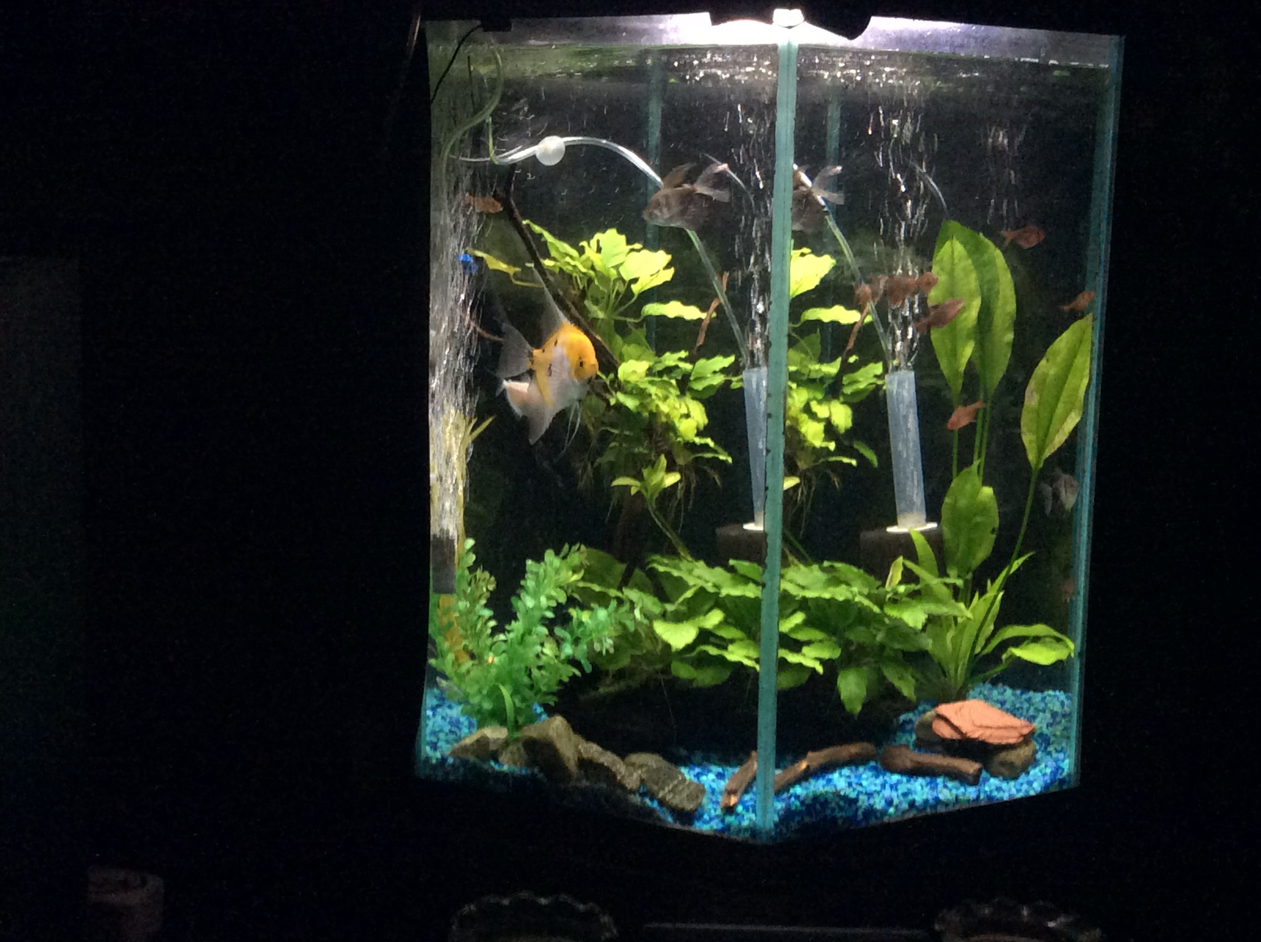 My Latest Updates To My 35 Gallon Tall Hex Tank Tropical Fish Forums