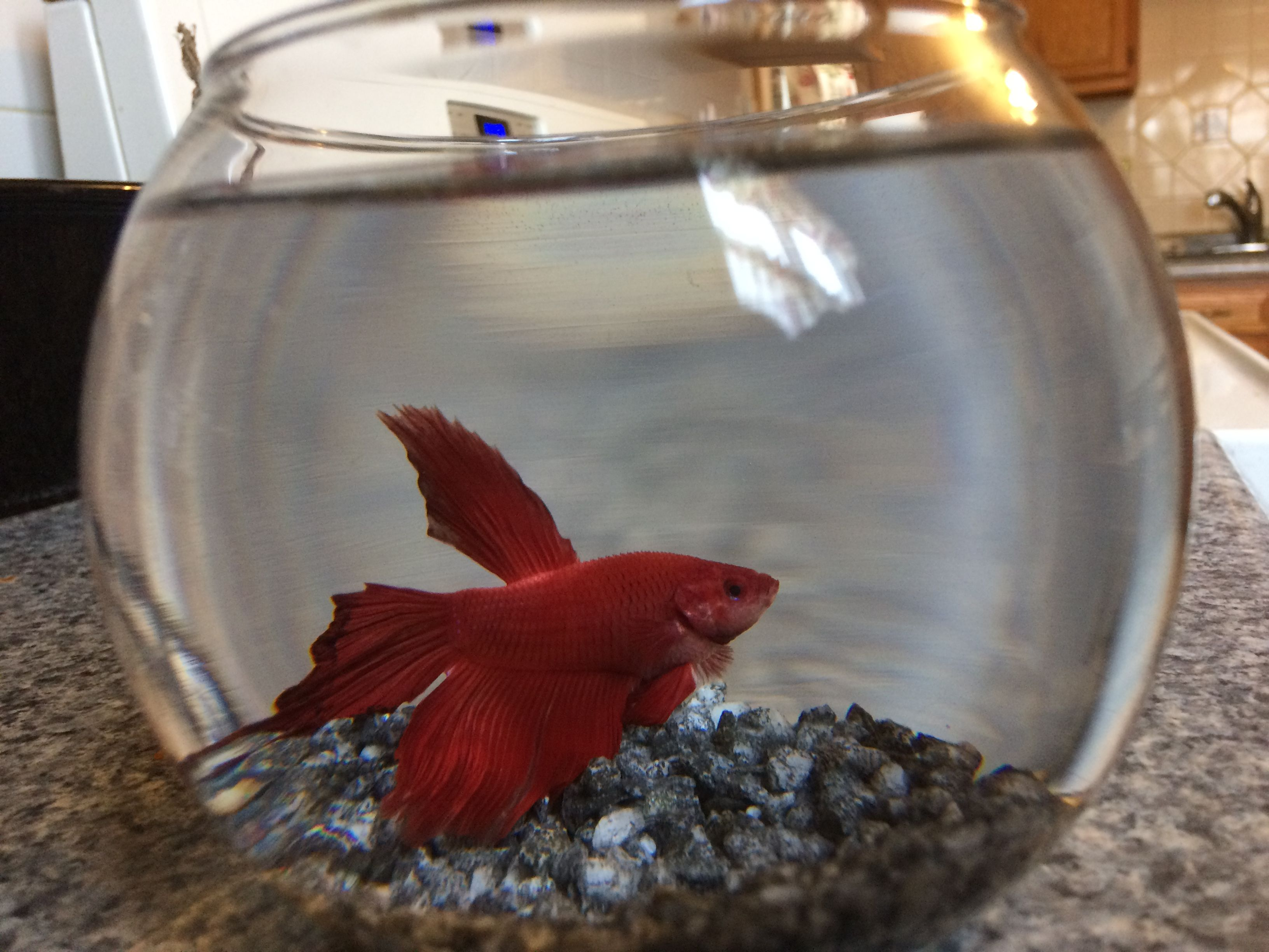 Fish for unfiltered tank - So I Have Had A Red Male Betta Fish For About A Year Now It S Was A Gift From A Close Friend And It Came With A 25gallon Tank