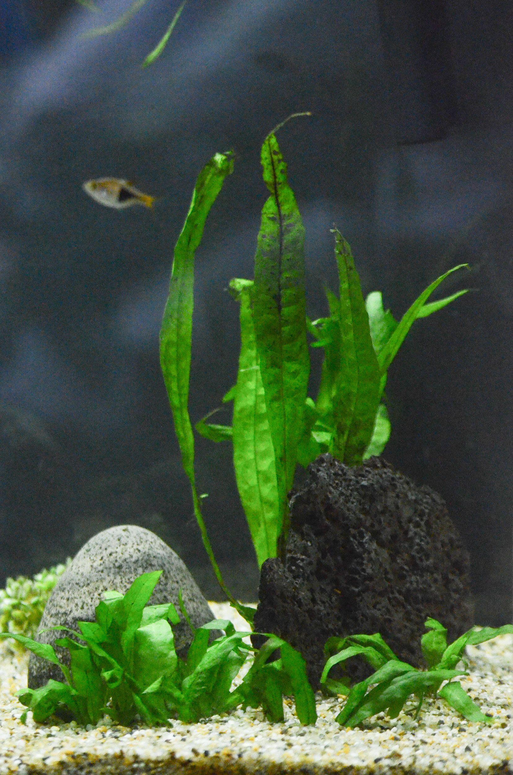 leafy-plant.jpg