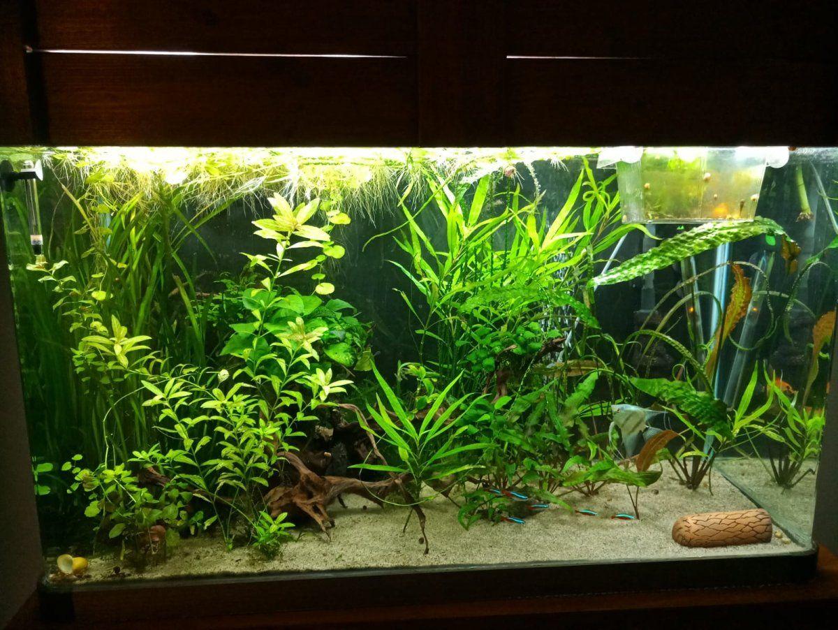My aquarium 2.jpg