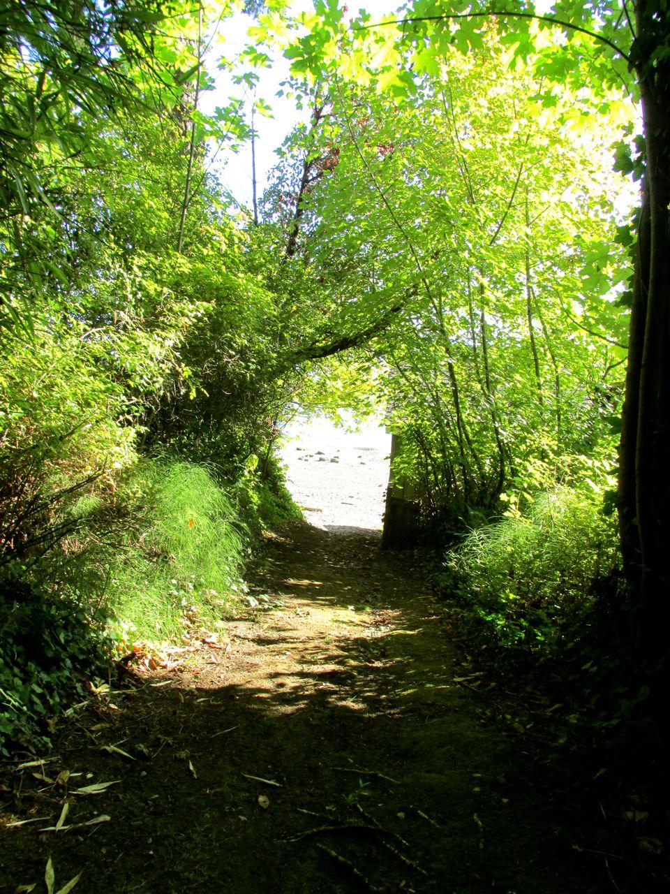 Path leading to beach Mill Bay.jpg