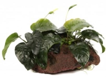 plante.jpg