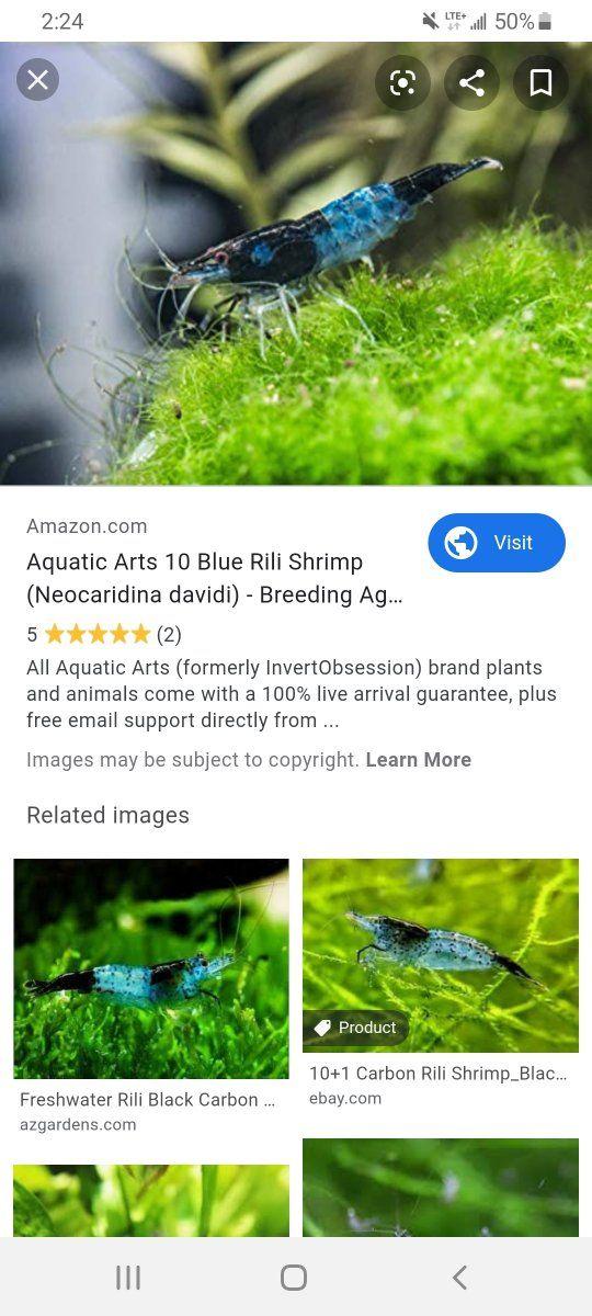 Screenshot_20191212-142416_Samsung Internet.jpg