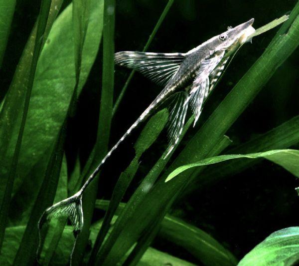 Whiptail.jpg