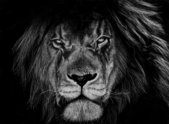 Charcoal Lion.png