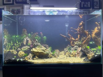 50gal scaping v3-planted.jpeg