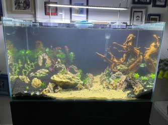 50gal scaping v3-planted 2.jpeg
