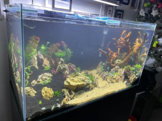 50gal scaping v3-planted 3.jpeg