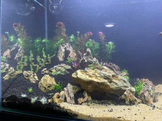 50gal scaping v3-planted 7.jpeg