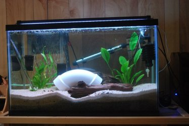 29 gallon pleco only tank.jpg