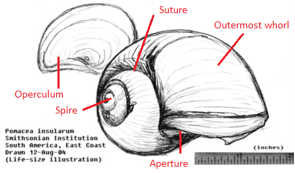 shell_diagram1.png