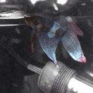 Blondielovesfish