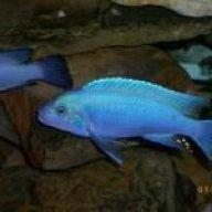 fishguy101