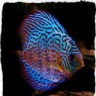 CrazyAboutFish