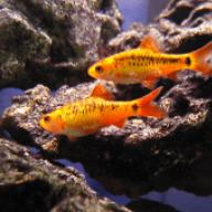Seymourfish