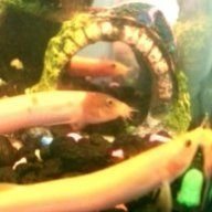 LovelyLoaches