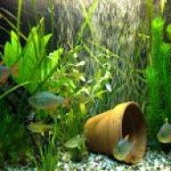 fishmanphil