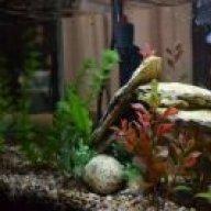 HarpyFishLover