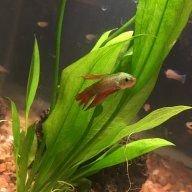 fishlover22346