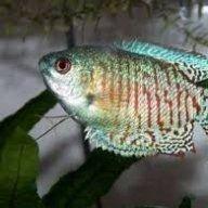 FisherFin
