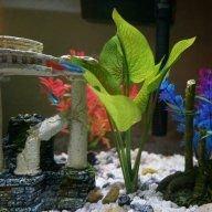 Aesthetic-fish