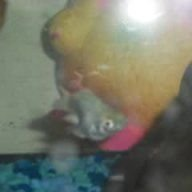 fishlover88
