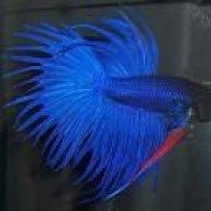 FishFanatic04