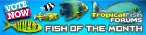 FishForums.net Fish of the Month