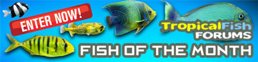 Fish of the Month Contest