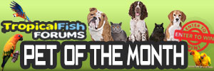 FishForums.net Pet of the Month