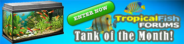 FishForums.net Tank of the Month