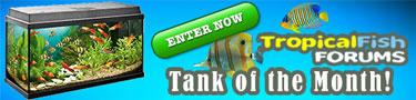 FishForums.net Tank of the Month