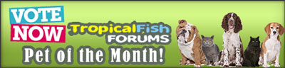 FishForums.net Vote Pet of the Month